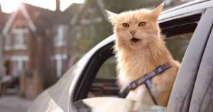 O2 and VCCP turn cats into dogs to try to cut through mobile ad clutter