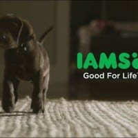 New DDB New York campaign for IAMS tries to recapture the success of 'Casey'