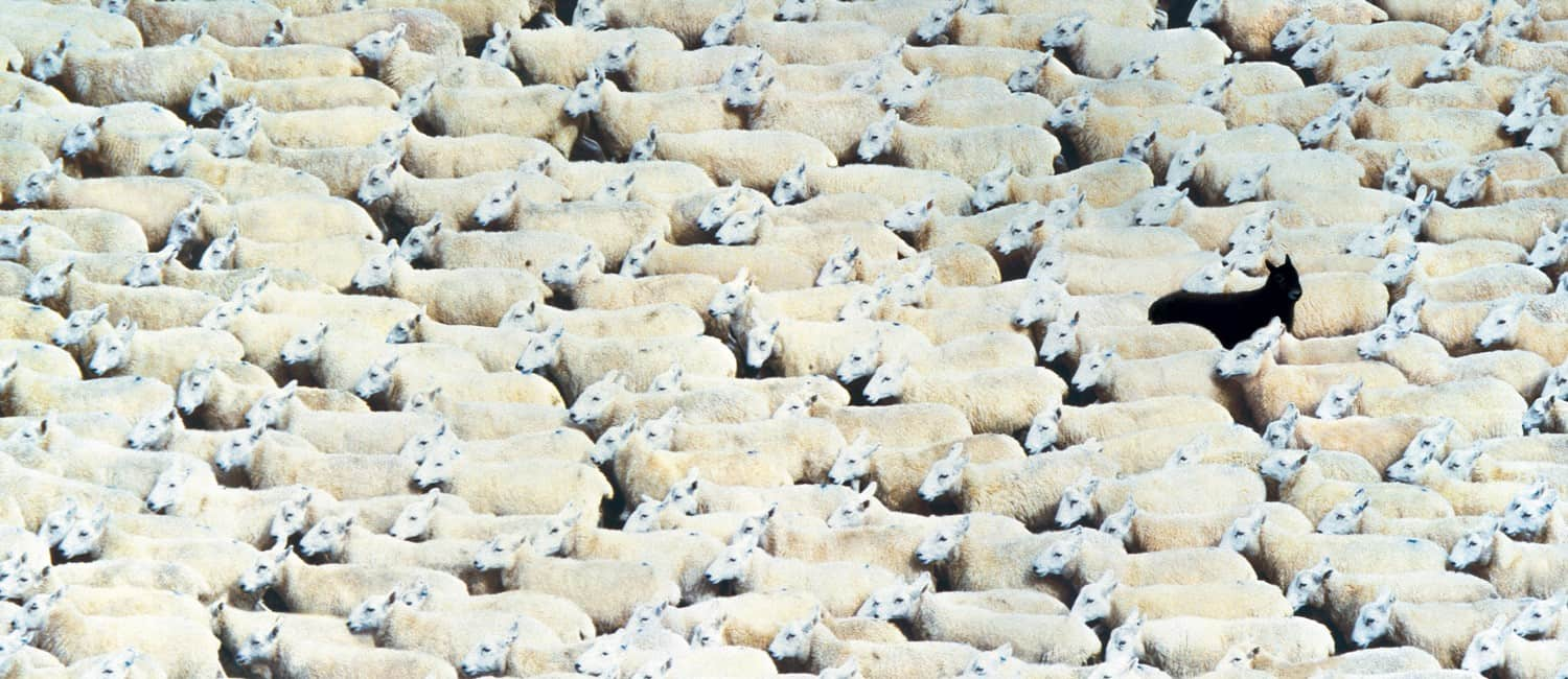 sheep_header-1-1500x650