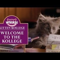 AMV BBDO unveils Kitten Kollege for Whiskas