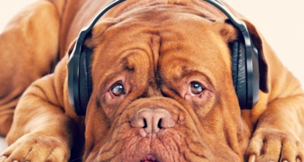 Mad owners clamour for 'WhatsYapp' digital dogs