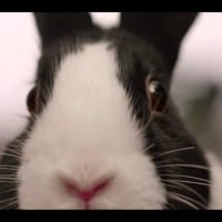 Dublin agency DDFH&B turns to rampant rabbits for Lottery scratchcards launch