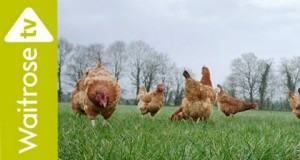 Waitrose challenges rivals down on the farm in new adam&eve spring campaign