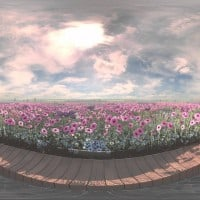 Atomic and Rushes produce virtual reality garden for Cancer Research UK